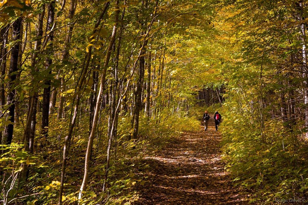Scotora Trail