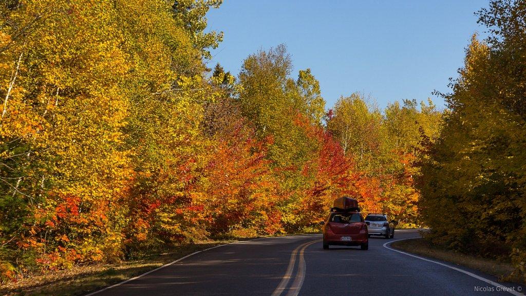 Driving Through Fall 3